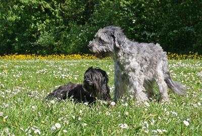 Dayka en Dixie, 15 jaar oud