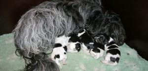 Hebe met haar pups